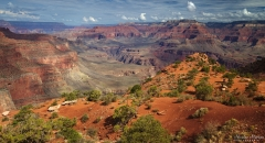 Grand Canyon - Cedar Ridge